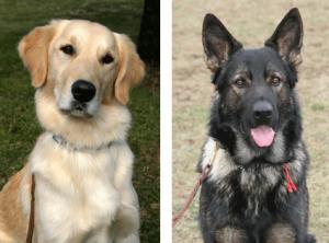Karen's Dogs Barley and Radar (RIP)